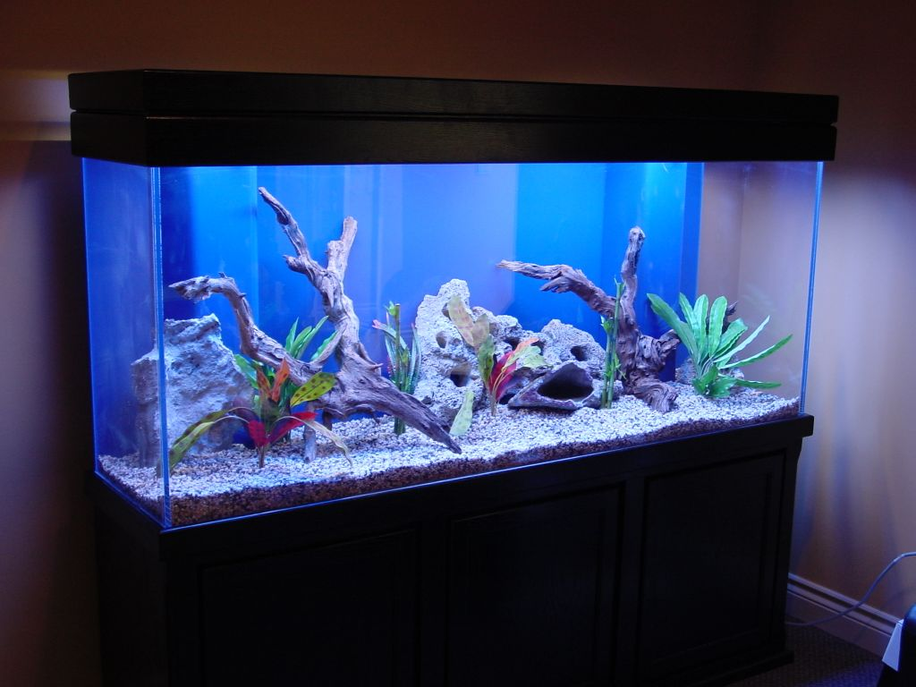 Fish aquarium in brisbane -